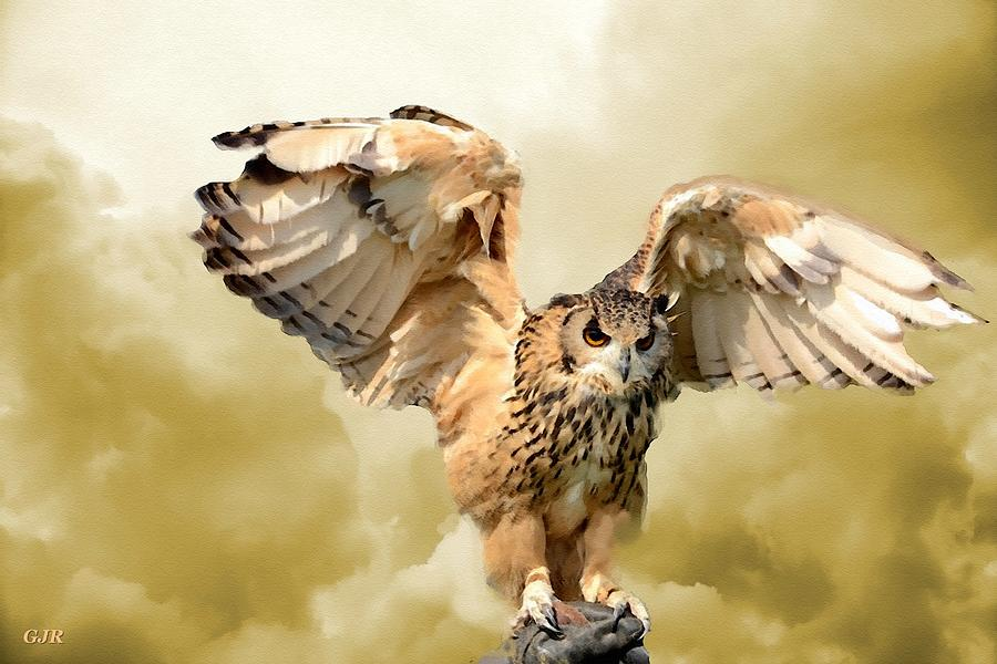 An Owl Landing With Cloud Background L A S Digital Art