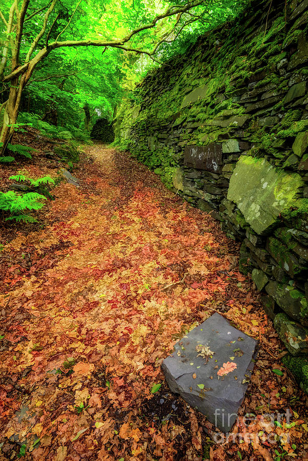 Ancient Wall Autumn by Adrian Evans