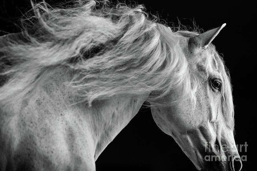 Horse Photograph - Andalusian Motion by Shelley Paulson