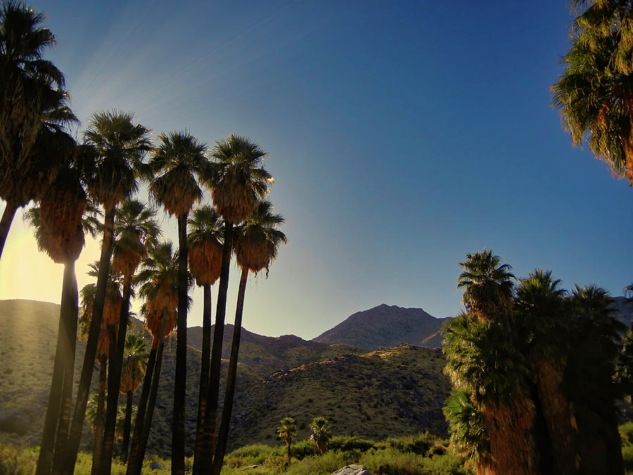 Andreas Canyons Fan Palms Photograph