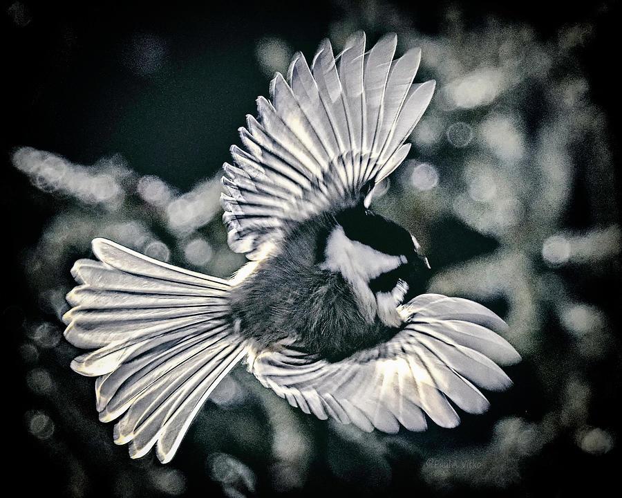 Bird Photograph - Angel Bird by Paul Vitko