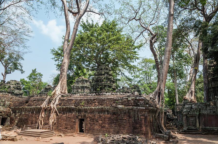Angkor Wat Trees Photograph