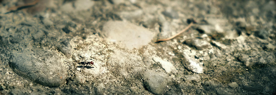 Ant Horizontal Background Photograph