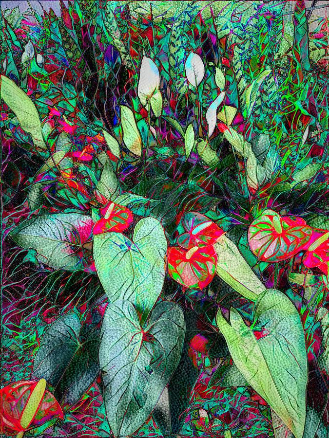 Anthurium Garden Photograph