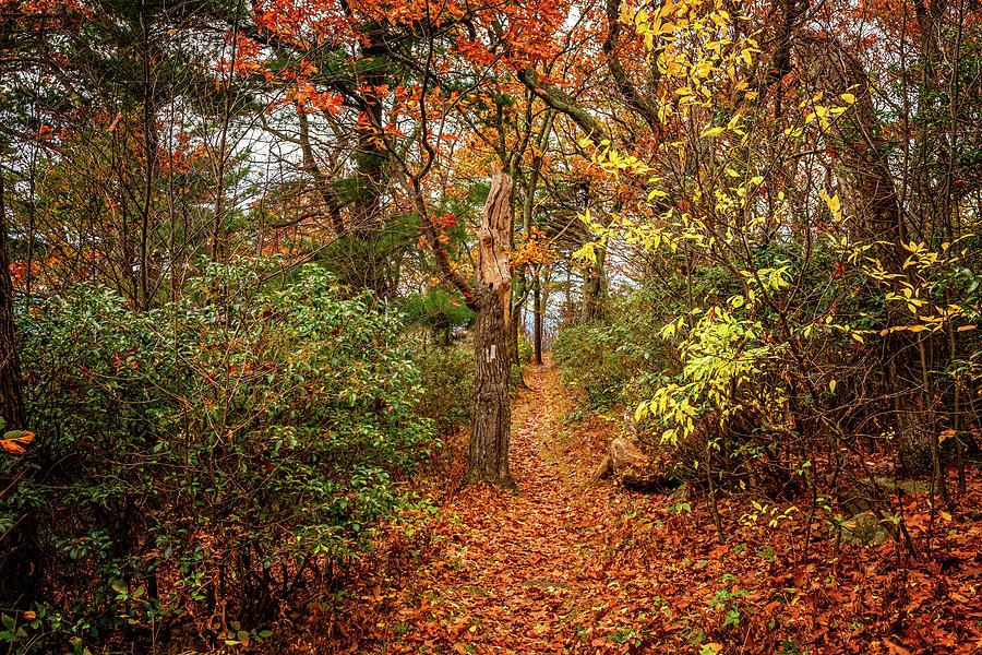 Appalachian Trail In Shenandoah National Park Photograph