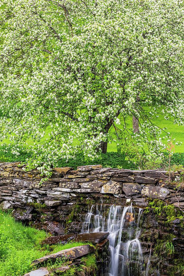 Apple Blossom Spring 2 Photograph