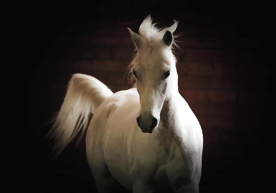 Arabian Horse Art Photograph