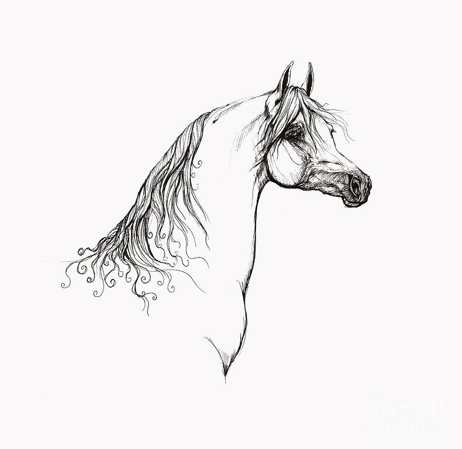 Arabian Horse Drawing 10 Drawing
