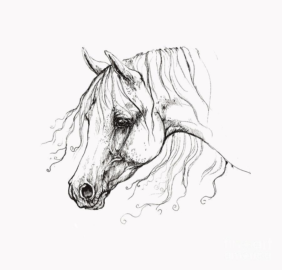 Arabian Horse Drawing 13 Drawing