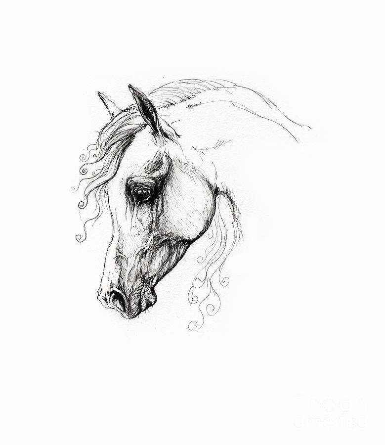 Arabian Horse Drawing 15 Drawing