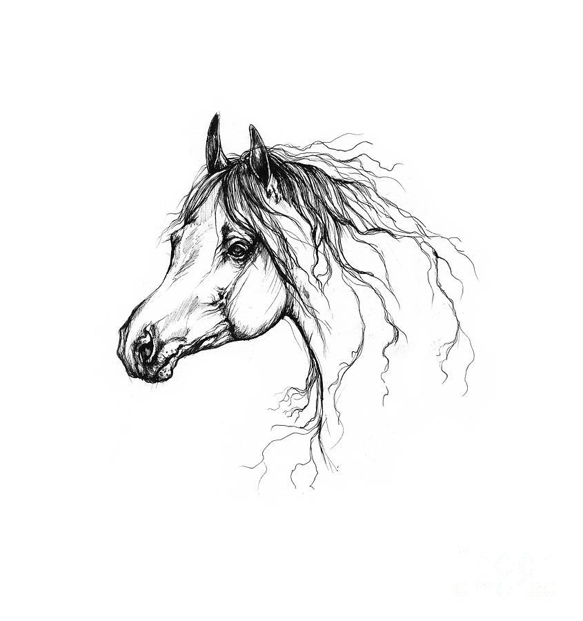 Arabian Horse Drawing 37 Drawing