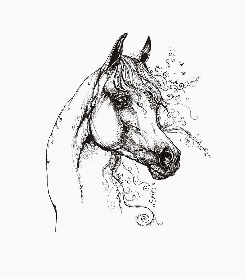 Arabian Horse Drawing 9 Drawing