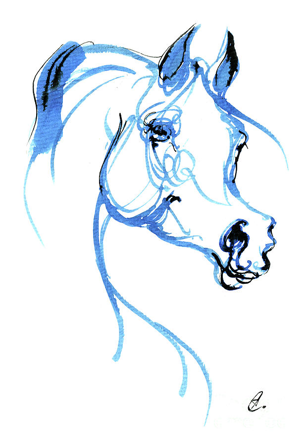 Arabian horse ink drawing 2019 12 02 by Angel Ciesniarska