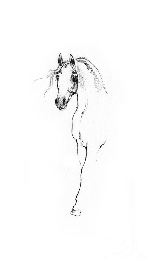 Arabian Horse Sketch 2014 05 24 A Drawing