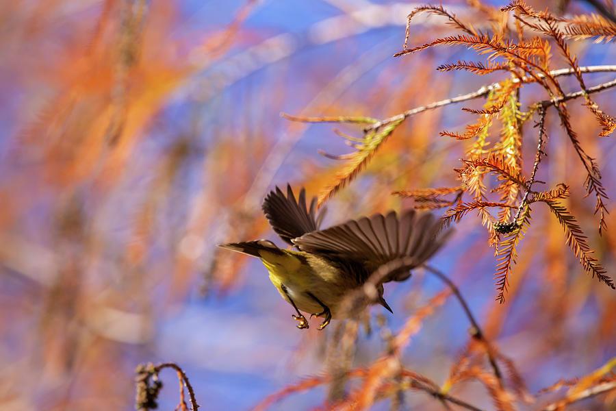 Arcadian Flycatcher by Kevin Banker