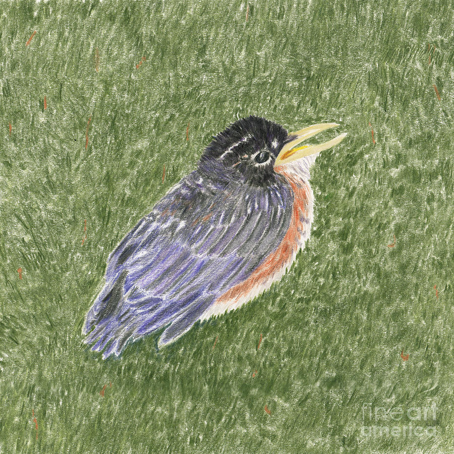 Are You My Mom??? Baby Robin Out Of The Nest Drawing