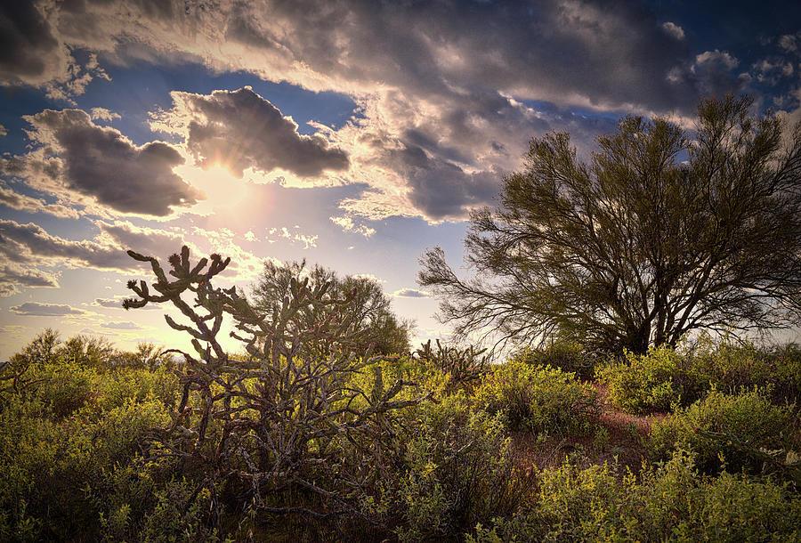 Arizona Sunlight Photograph