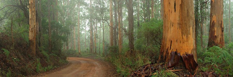 Karri Forest Photograph - Around The Corner by Alex Bond
