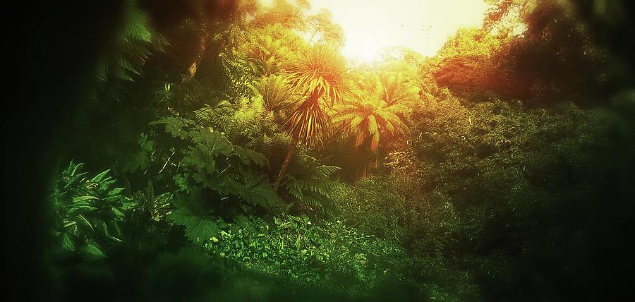 Jungle Digital Art - Art - Light in the Jungle by Matthias Zegveld