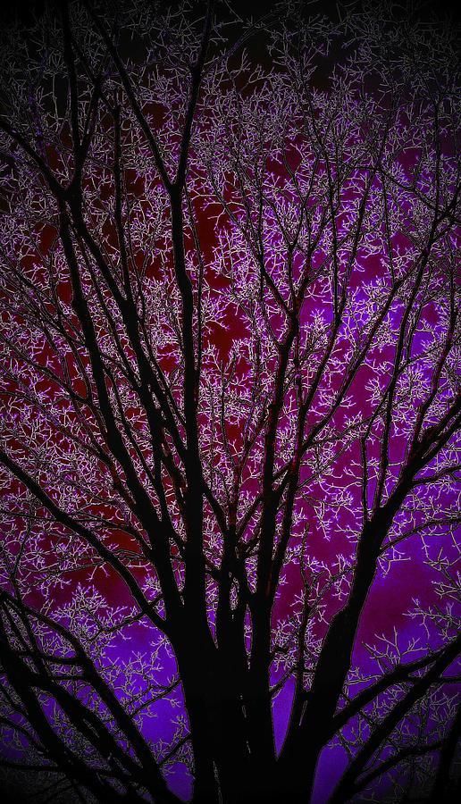 Art Of A Purple Tree Digital Art
