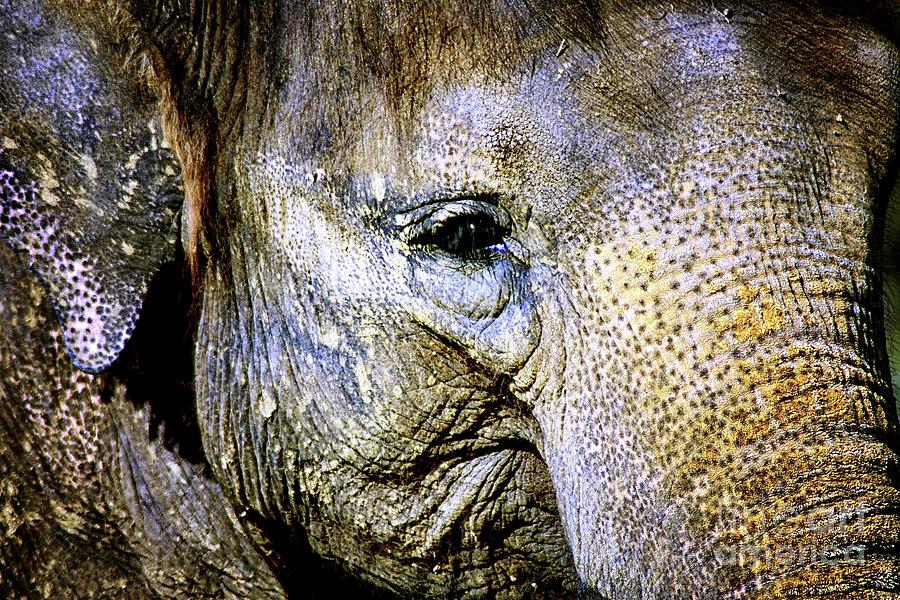 Asian Elephant Photograph