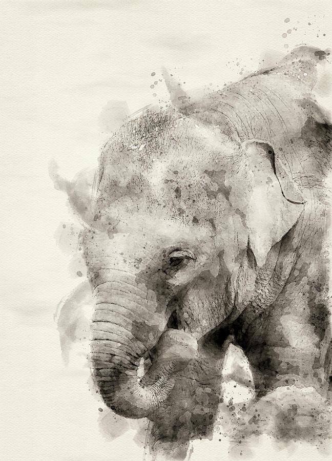 Asiatic Elephant Digital Art