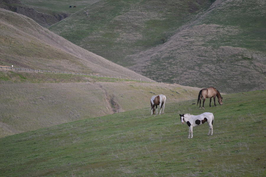 Spotted Horse Photograph - Asotin Ponies by YHWHY Vance