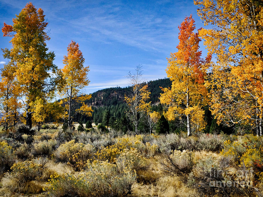 Aspen and Rabbitbrush by Parrish Todd