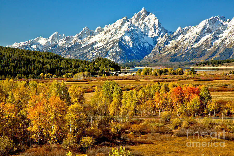 Aspen Colors Under The Tetons by Adam Jewell