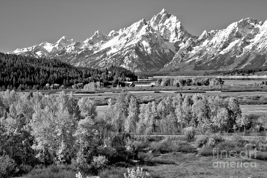 Aspen Colors Under The Tetons Black And White by Adam Jewell