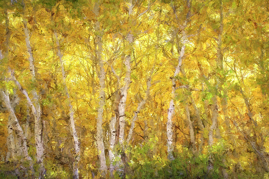 June Lake Photograph - Aspen Glow - Painterly by Donna Kennedy