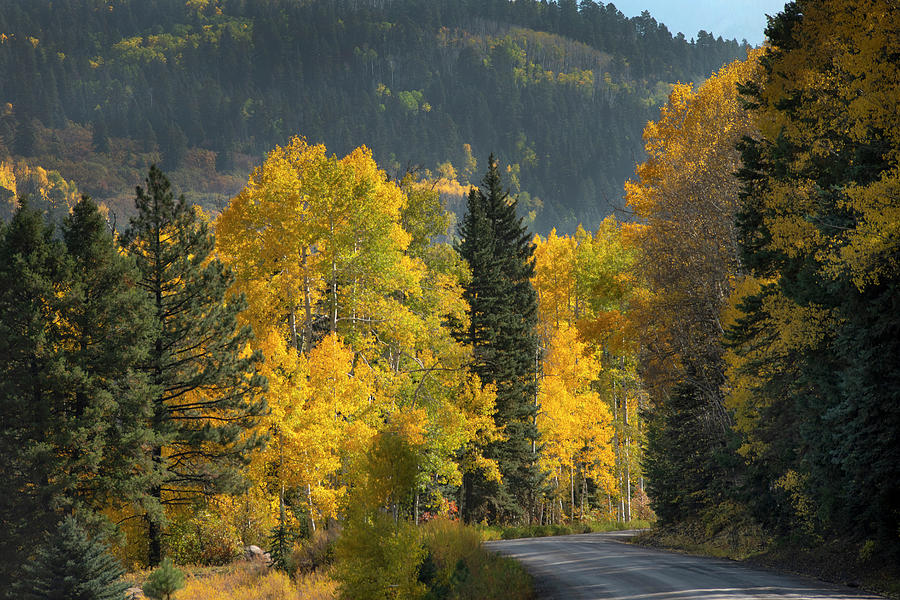 Aspen Photograph - Aspen near Pagosa Springs-2 by Mark Langford