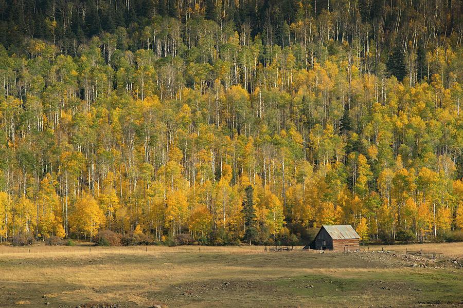 Aspen Photograph - Aspen near Pagosa Springs-3 by Mark Langford