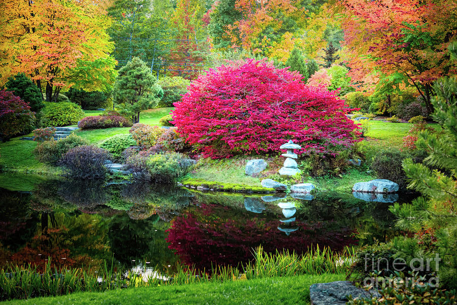 Asticou Azalea Garden In The Fall by Anita Pollak