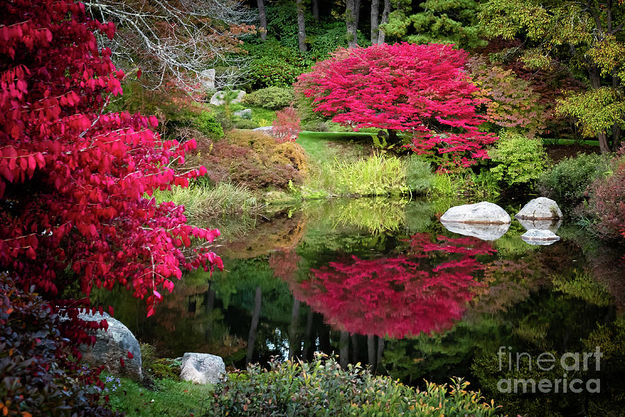 Asticou Azalea Garden In The Fall II by Anita Pollak