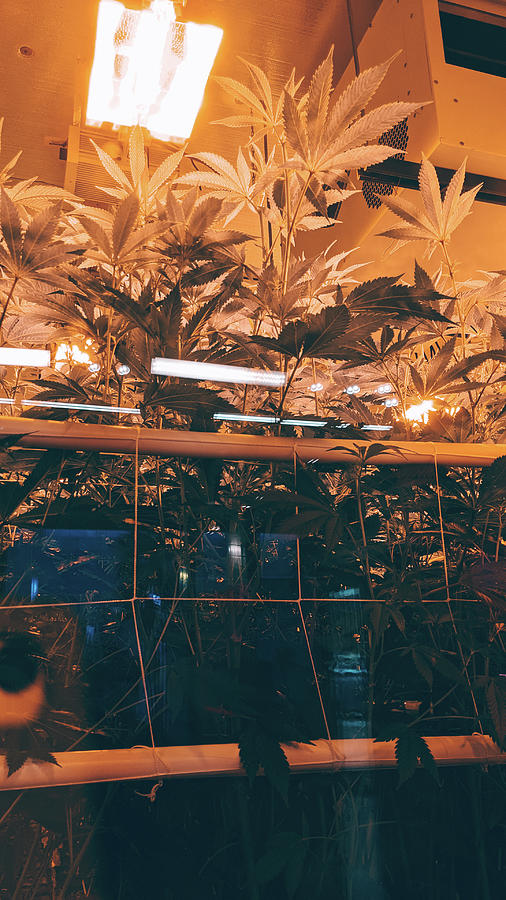 Plants Photograph - Astral Travel Plants by Jera Sky