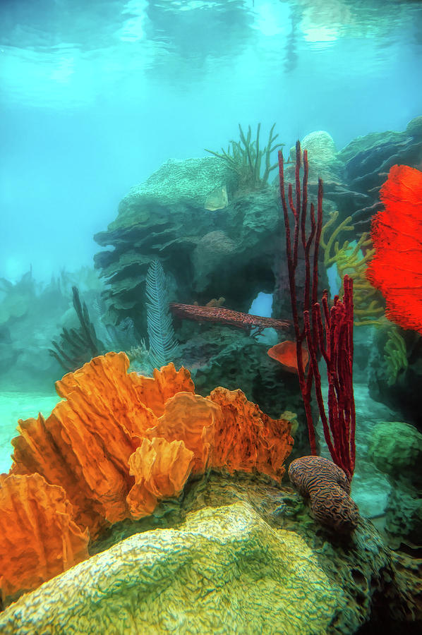 At the Reef by PAUL COCO