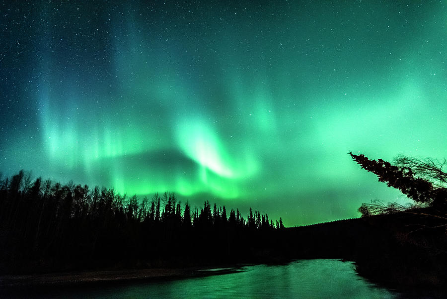 Aurora Over The Chena River Photograph