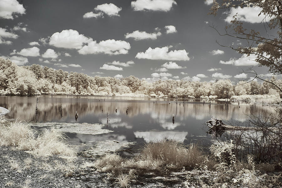 Austin Photograph - Austin Lake in Infrared  by Jim Cook