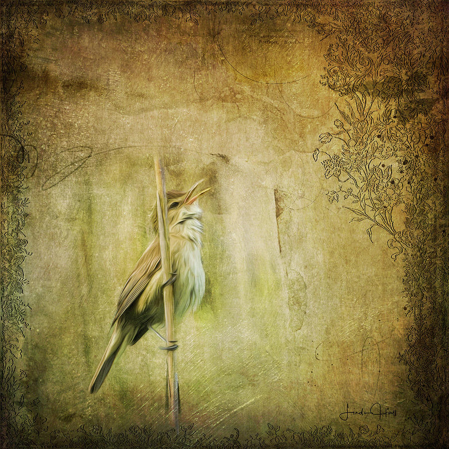 Digital Digital Art - Australian Reed Warbler by Linda Lee Hall