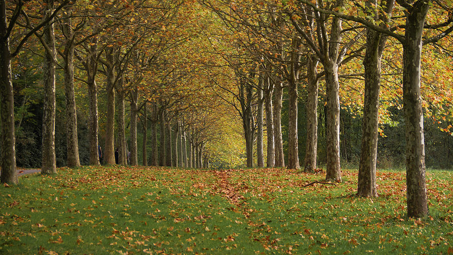 Trees Photograph - Autumn alignment by Michael Briley