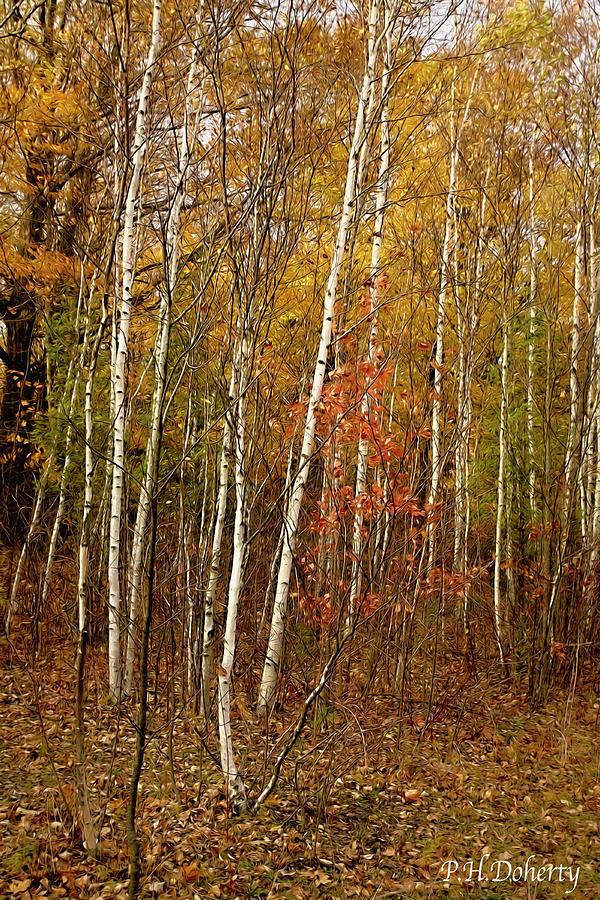 Autumn Among Birch Trees #1 Photograph