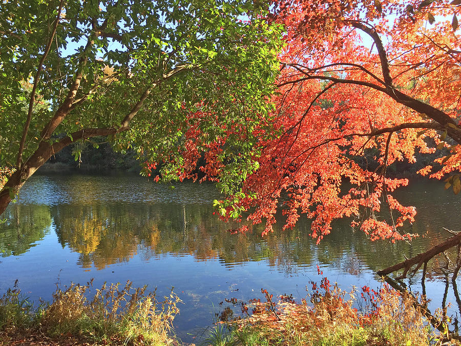 Autumn Arrives In South by Matthew Seufer