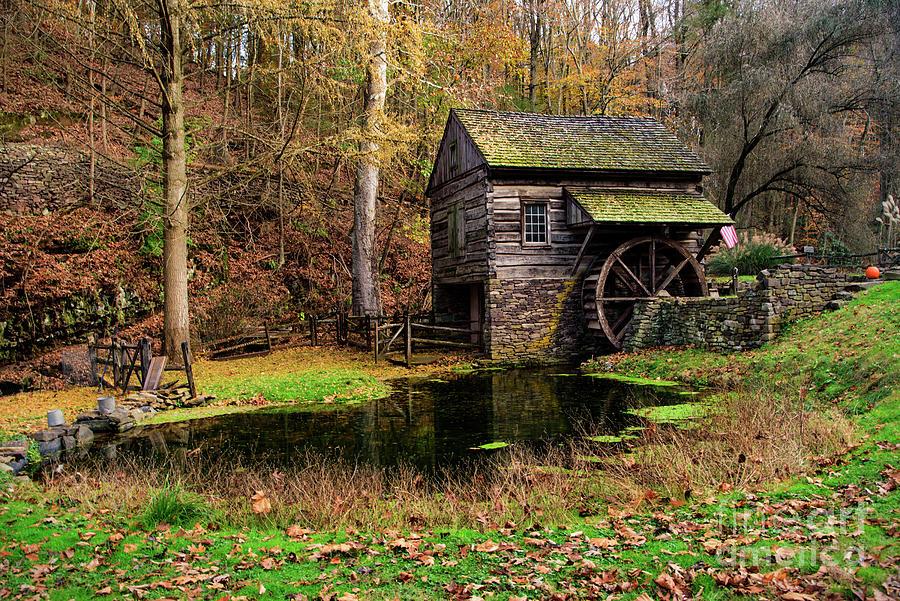 Autumn at Cuttalossa by Debra Fedchin