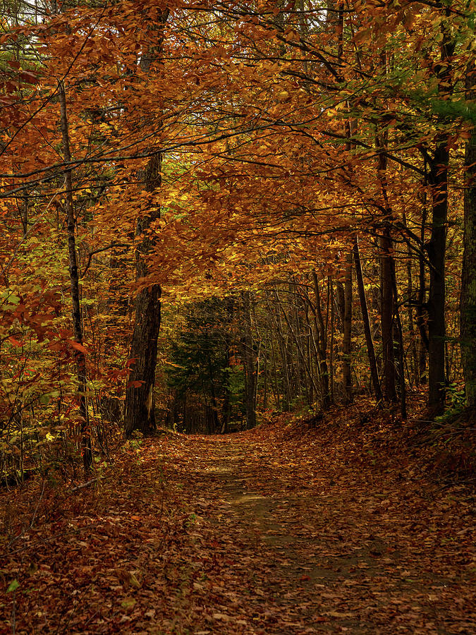 Autumn Avenue Photograph