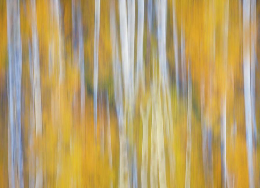 Autumn Awakening Photograph