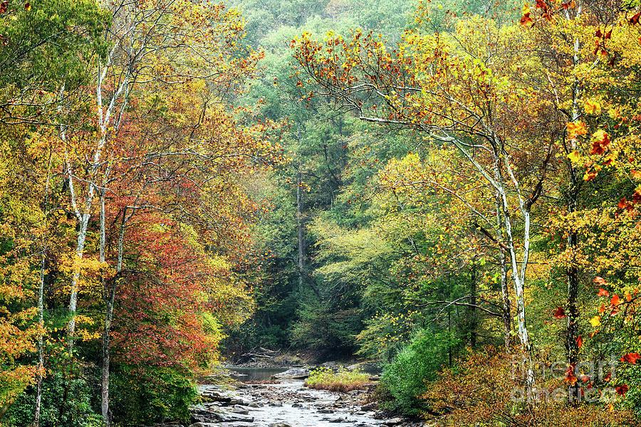 Autumn Back Fork of Elk River by Thomas R Fletcher