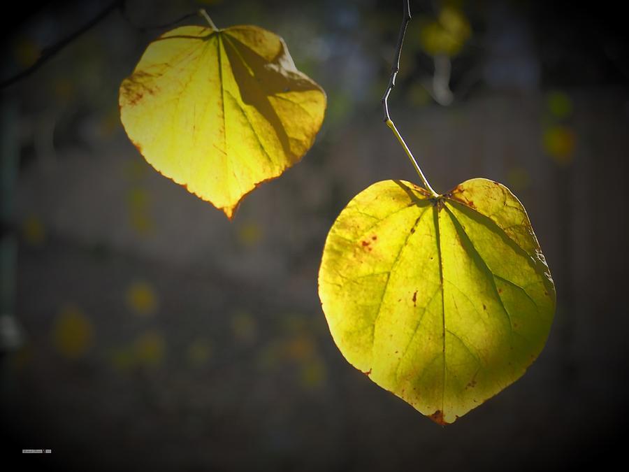 Autumn Back Light by Richard Thomas