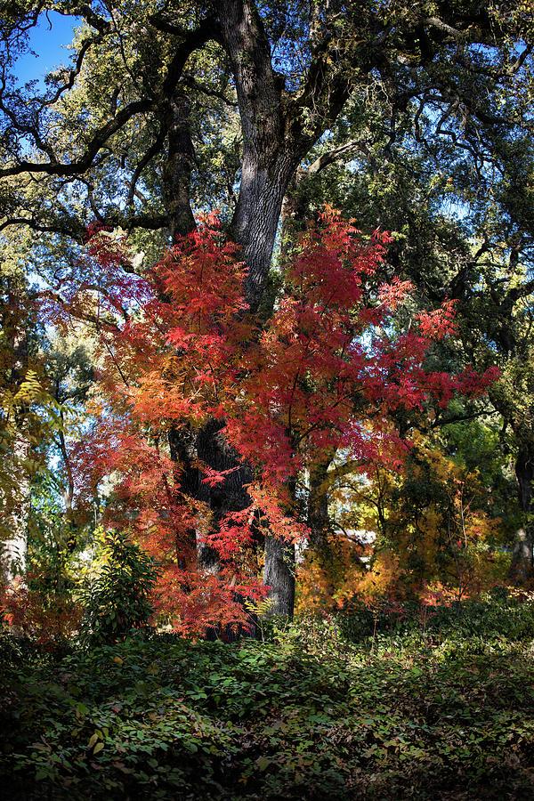 Trees Photograph - Autumn Blaze by John Heywood