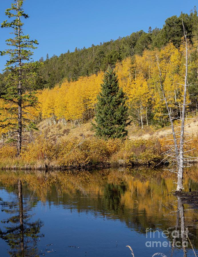 Autumn Calm On Anne-marie Falls Trail Photograph